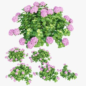plants hydrangea set 05 3D model