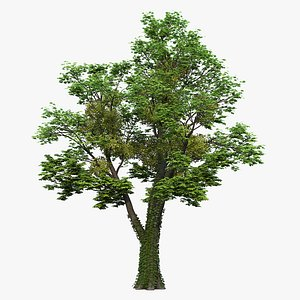 3D tree maple model
