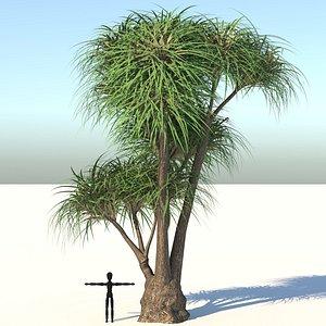 3D ponytail palm tree model