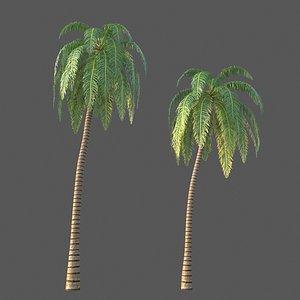 XfrogPlants Coconut - Cocos Nucifera model