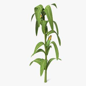 corn stalk 3D model