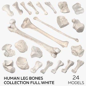 3D Human Leg Bones Collection Full White -  24 models model