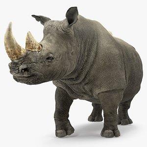 3D rhino standing pose model