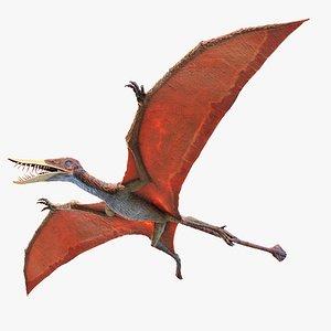 Rhamphorhynchus 3D