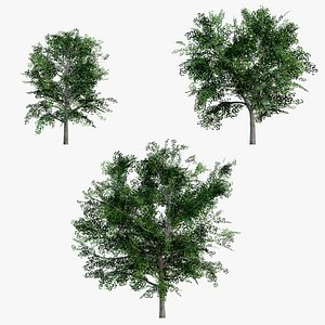 3D Maples Pack GameReady LODs