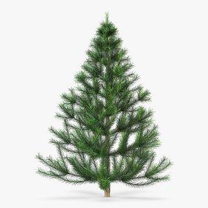 3D model conifer tree 150cm v
