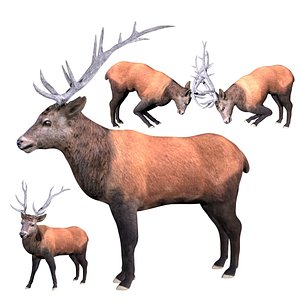 Elk Deer Fully  Rigged Low poly 3D model