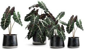 3D plants interior pots amazonian