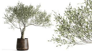3D Olive tree in a flowerpot for the interior 969