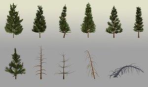 coniferous pine trees lod model