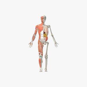 body man 3D model