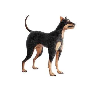 3D Pincher Dog