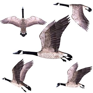 Rigged low poly Canadian Goose model