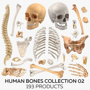 Human Bones Collection 02 - 193 Products 3D