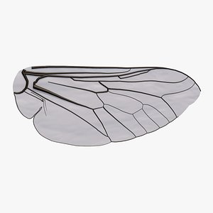 3D Insect Wing model