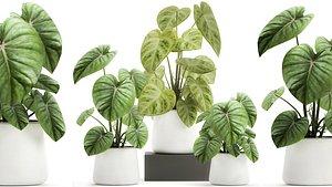 plants interior pots 3D