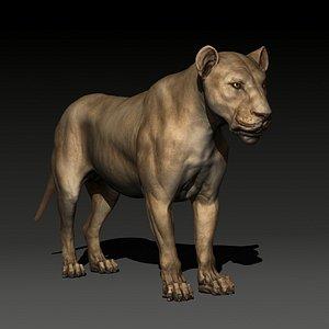 3D model animal lion