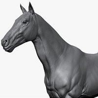 Horse - Sculpt