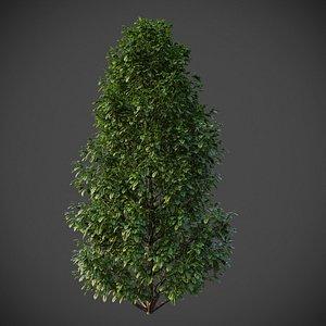 3D XfrogPlants American Holly - Ilex Opaca model