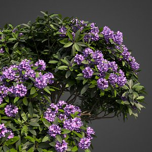 3D plants common rhododendron pbr model