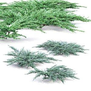 3D juniper bushes model