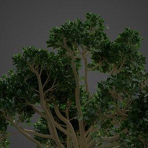 tree nature model