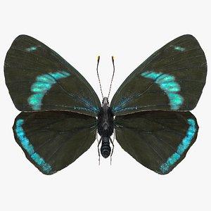 3D Animated Diaethria Clymena Butterfly Flight Fur