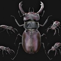 Realistic Rigged Low Poly Stag Beetle