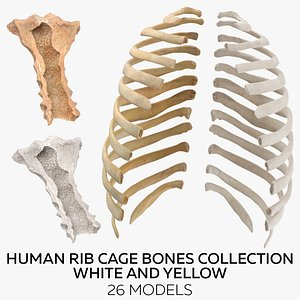 3D Human Rib Cage Bones Collection White and Yellow - 26 models