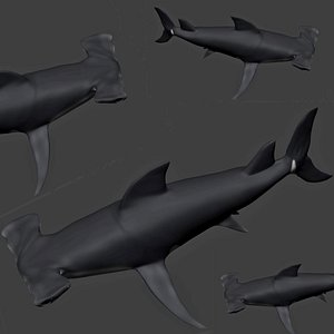 fully rigged hammerhead shark 3D