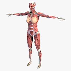 3D model LowPoly Complete Human Female Anatomy