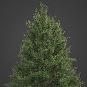 2021 PBR Prickly Juniper Collection - Juniperus Oxycedrus 3D