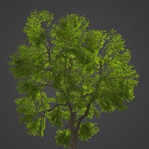 3D 2021 PBR Common Ash Collection - Fraxinus Excelsior model
