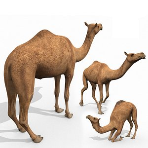 Pro Camel 8K - 3d animated model 3D model