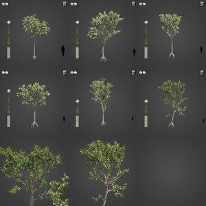 3D 2021 PBR Angophora Intermedia Floribunda Collection model
