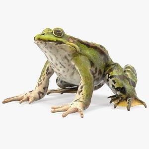 3D Frog Sitting Pose