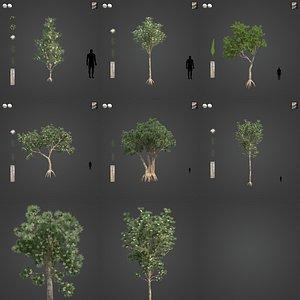 2021 PBR River Redgum Collection - Eucalyptus Camaldulensis 3D