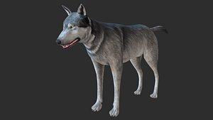 3D nature animal mammals model