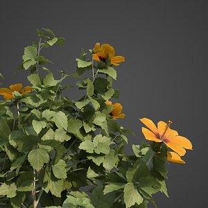 hibiscus flower nature model