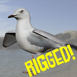 3D seagull rigged modelled