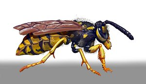 3D wasp insect bug model