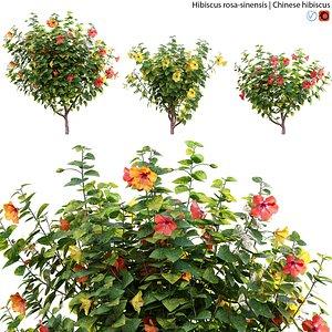 Hibiscus rosa 01 3D