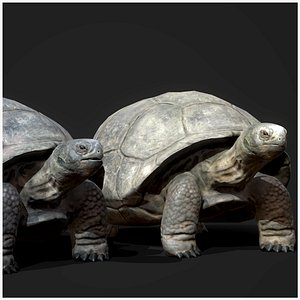 Galapagos Tortoise - Game Ready 3D model