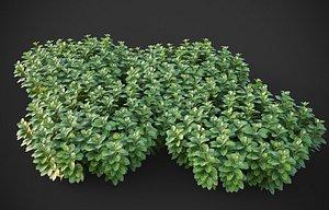 3D model XfrogPlants Japanese Pachysandra - Pachysandra Terminalis