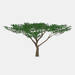 3D umbrella acacia african