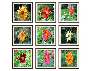 3D model pictures flowers photo