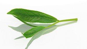 tea leaves sprig 3D