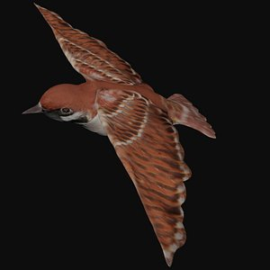 rigged flying bird 3D model