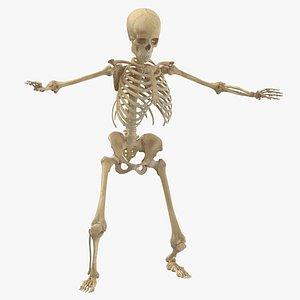 real human female skeleton 3D model