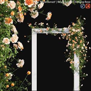 Rosa Royal Sunset - rose 01 model
